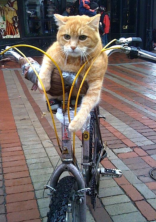 vie vélo paléo québec